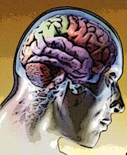 Cerebro republicano